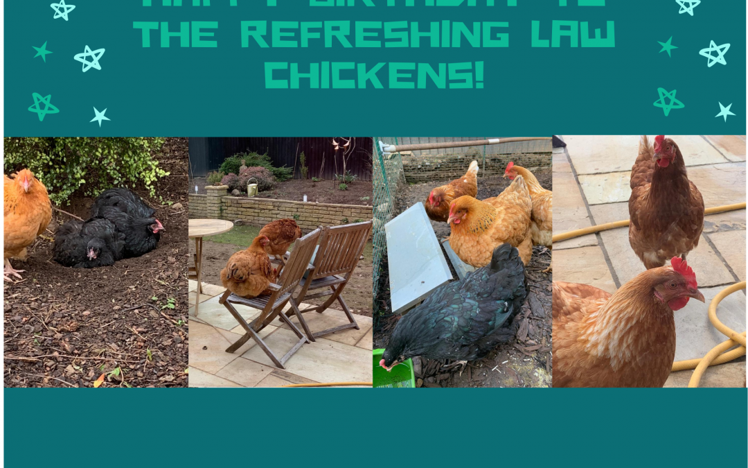 Happy birthday to the Refreshing Law chickens!